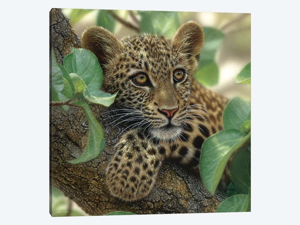 Tree Hugger - Leopard Cub, Square by Collin Bogle 1-piece Canvas Art Print