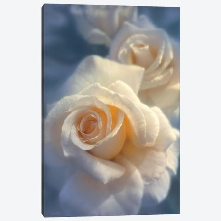 Unforgettable White Rose, Horizontal 3-Piece Canvas #CBO79} by Collin Bogle Canvas Artwork