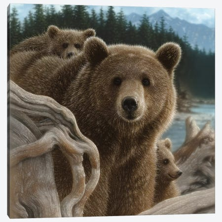 Brown Bears Backpacking, Square Canvas Print #CBO7} by Collin Bogle Canvas Print