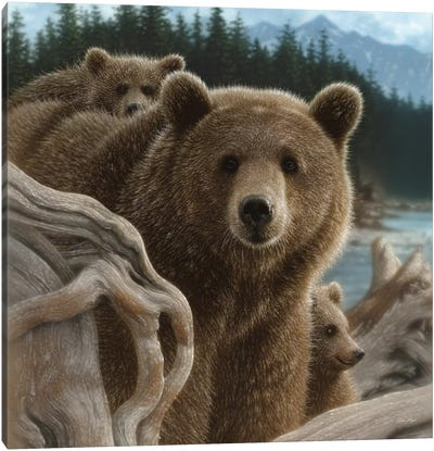 Brown Bears Backpacking, Square Canvas Art Print