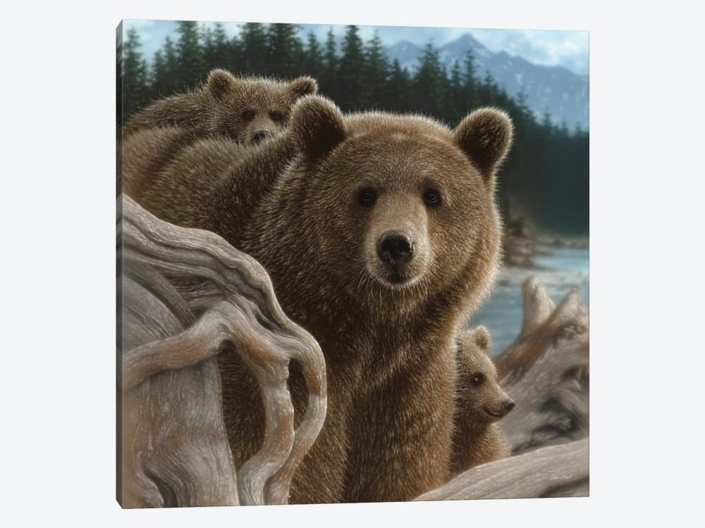 Brown Bears Backpacking, Square by Collin Bogle 1-piece Canvas Art