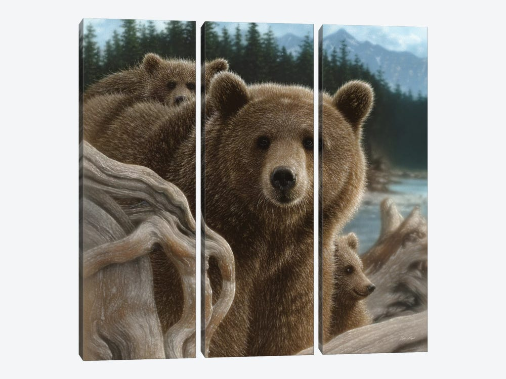 Brown Bears Backpacking, Square by Collin Bogle 3-piece Canvas Artwork