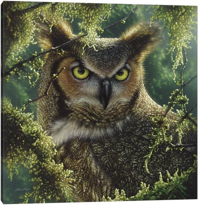 Watching And Waiting - Great Horned Owl, Square Canvas Art Print