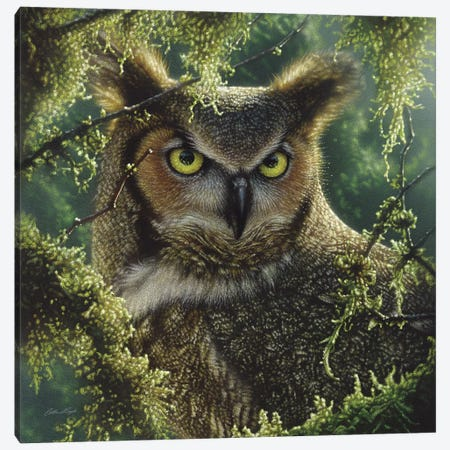 Watching And Waiting - Great Horned Owl, Square Canvas Print #CBO80} by Collin Bogle Art Print