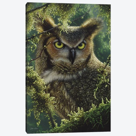 Watching And Waiting - Great Horned Owl, Vertical 3-Piece Canvas #CBO81} by Collin Bogle Canvas Print