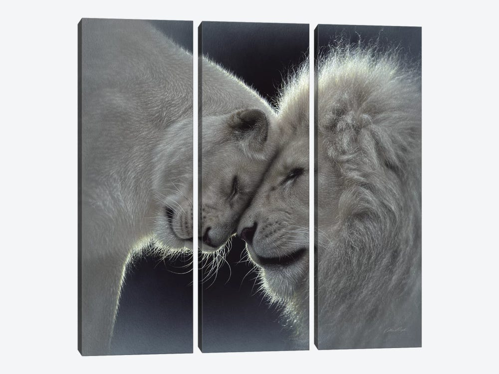 White Lion Love, Square 3-piece Canvas Wall Art