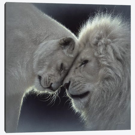 White Lion Love, Square Canvas Print #CBO83} by Collin Bogle Canvas Art Print