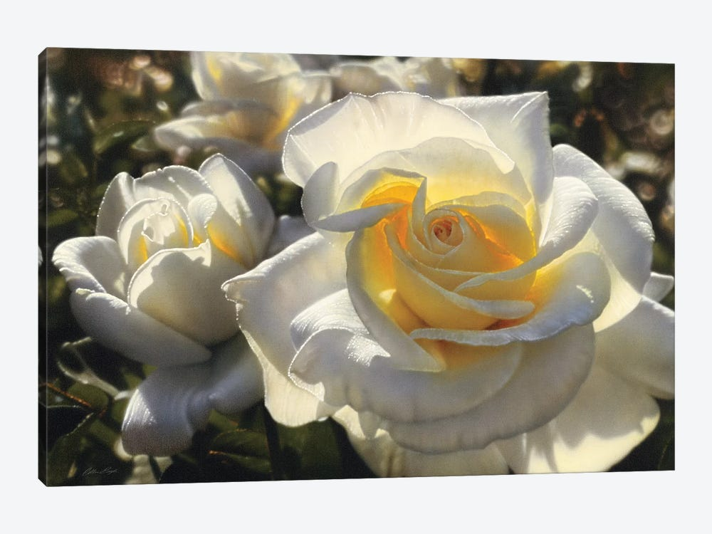 White Roses, Horizontal by Collin Bogle 1-piece Canvas Print