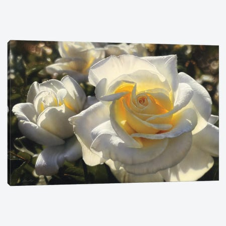 White Roses, Horizontal 3-Piece Canvas #CBO84} by Collin Bogle Canvas Artwork