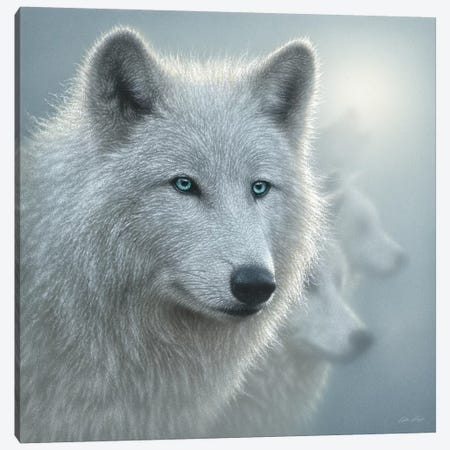 Arctic Wolf Whiteout, Square Canvas Print #CBO85} by Collin Bogle Canvas Art