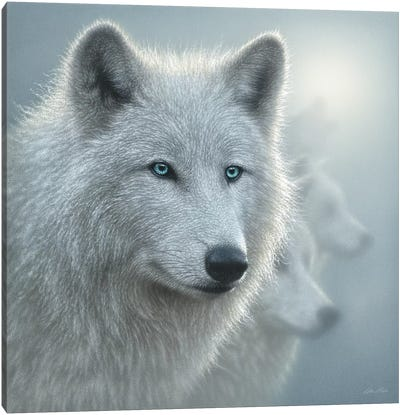 Arctic Wolf Whiteout, Square Canvas Art Print