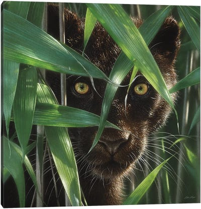 Wild Eyes - Black Panther, Square Canvas Art Print