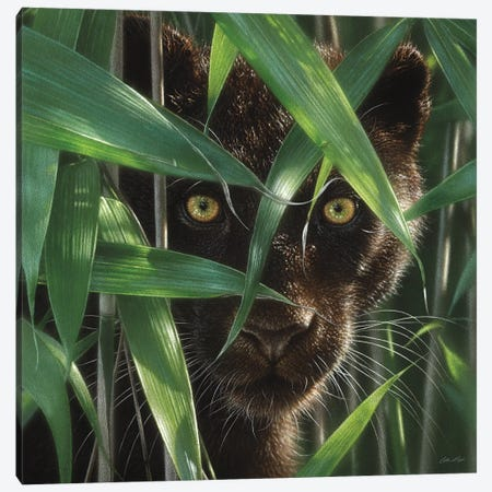 Wild Eyes - Black Panther, Square Canvas Print #CBO86} by Collin Bogle Canvas Art