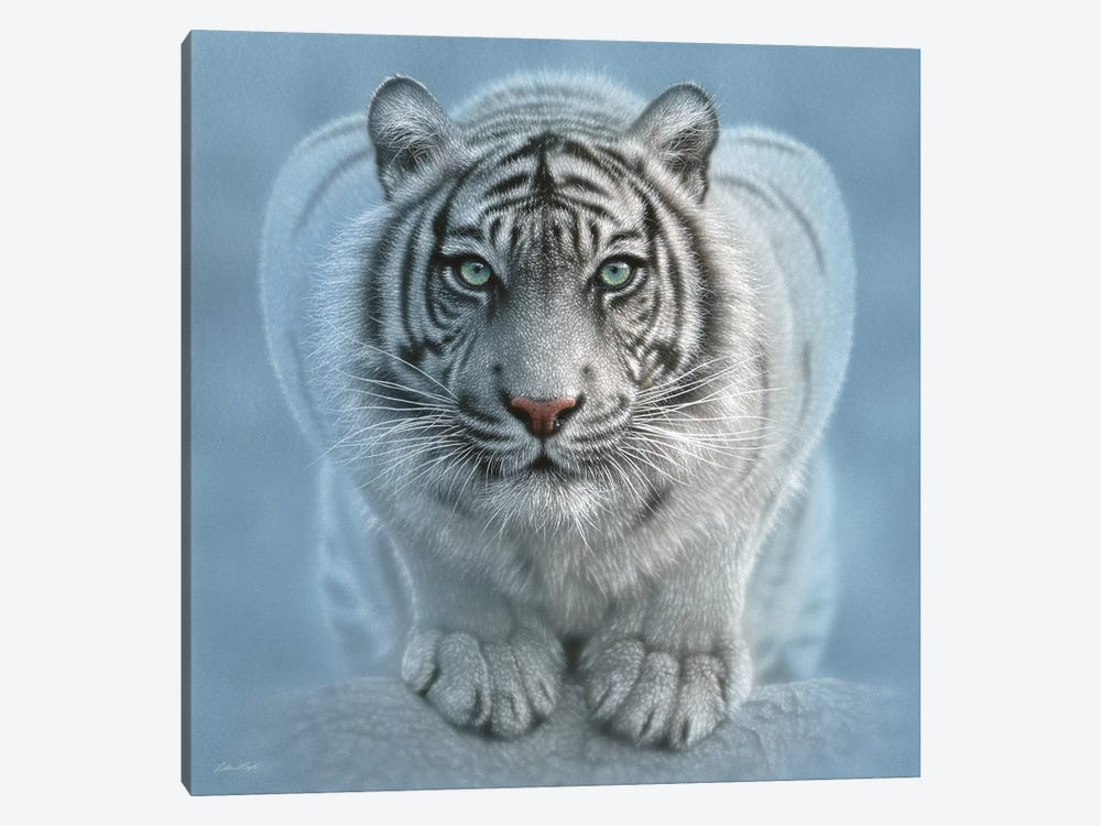 Wild Intentions - White Tiger, Square by Collin Bogle 1-piece Canvas Wall Art