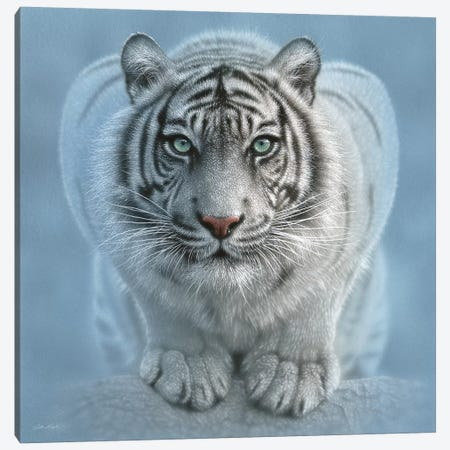 Wild Intentions - White Tiger, Square Canvas Print #CBO87} by Collin Bogle Canvas Wall Art