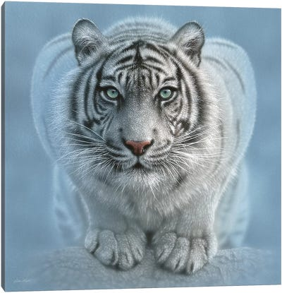 Wild Intentions - White Tiger, Square Canvas Art Print