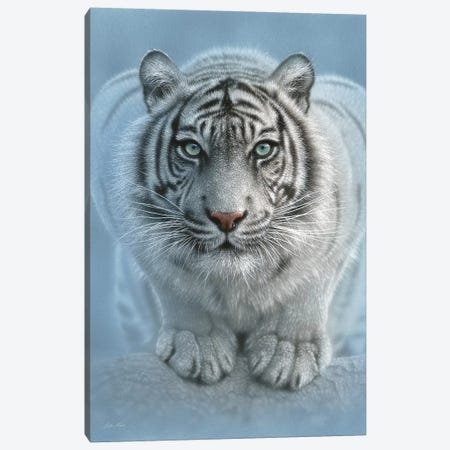 Wild Intentions - White Tiger, Vertical Canvas Print #CBO88} by Collin Bogle Canvas Art Print