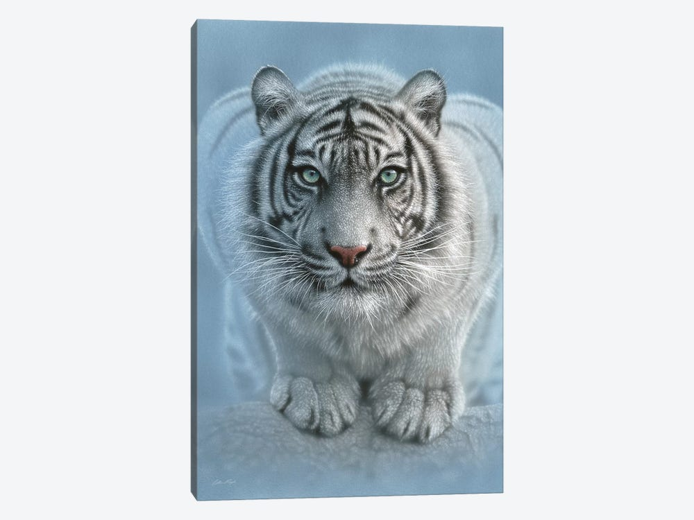 Wild Intentions - White Tiger, Vertical by Collin Bogle 1-piece Canvas Art Print