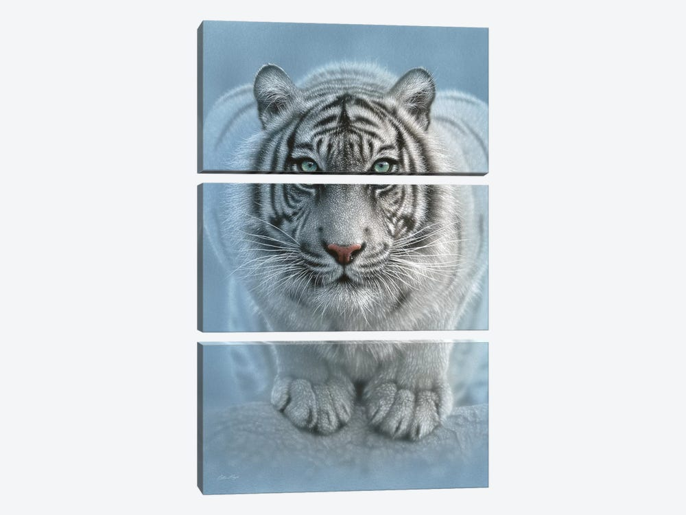 Wild Intentions - White Tiger, Vertical by Collin Bogle 3-piece Canvas Art Print