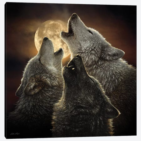 Wolf Trinity, Square Canvas Print #CBO89} by Collin Bogle Art Print