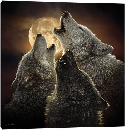 Wolf Trinity, Square Canvas Art Print
