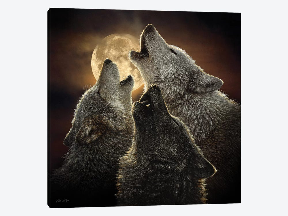 Wolf Trinity, Square by Collin Bogle 1-piece Canvas Art