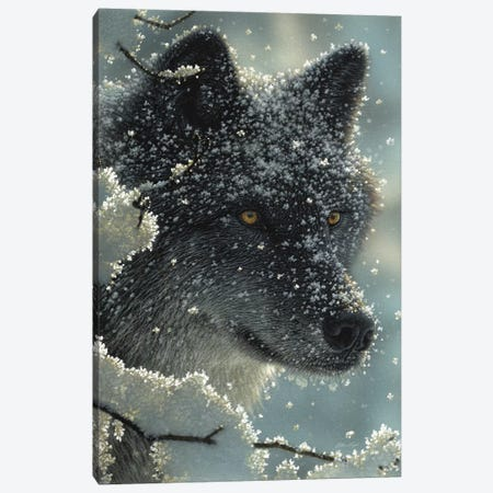 Black Wolf in White 3-Piece Canvas #CBO93} by Collin Bogle Canvas Wall Art