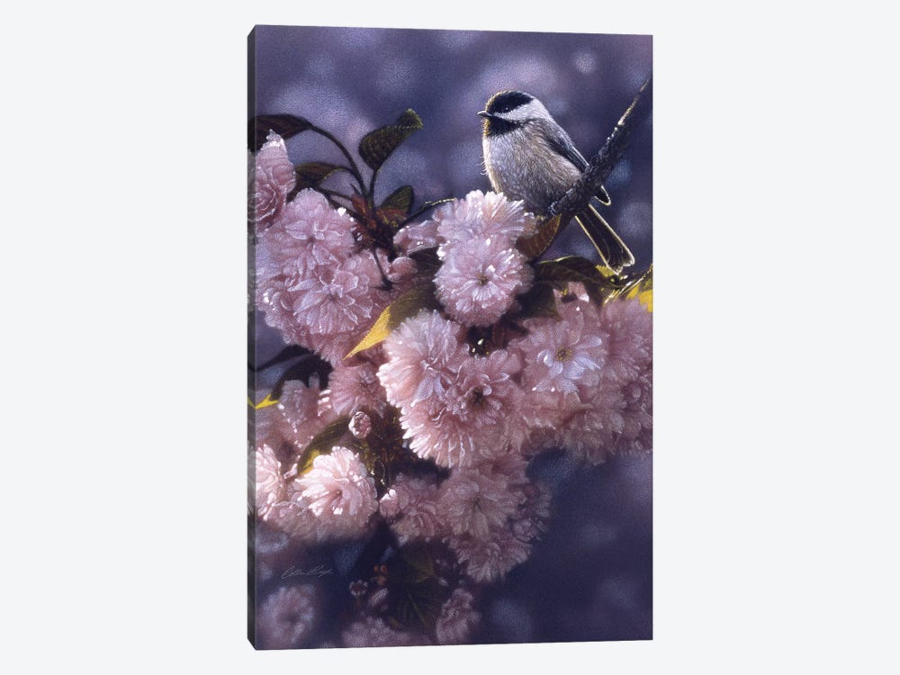 Black-Capped Chickadee In Spring Pink by Collin Bogle 1-piece Canvas Art
