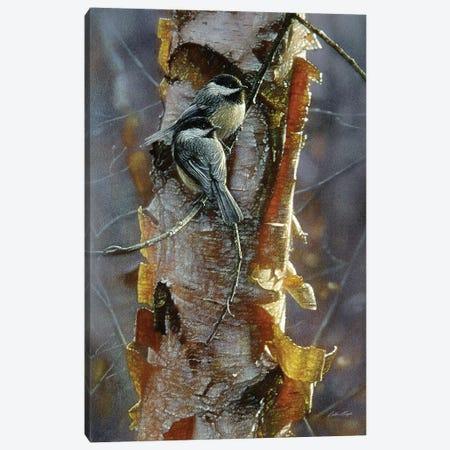 Black-Capped Chickadees - Sunlit Birch I Canvas Print #CBO95} by Collin Bogle Canvas Art Print