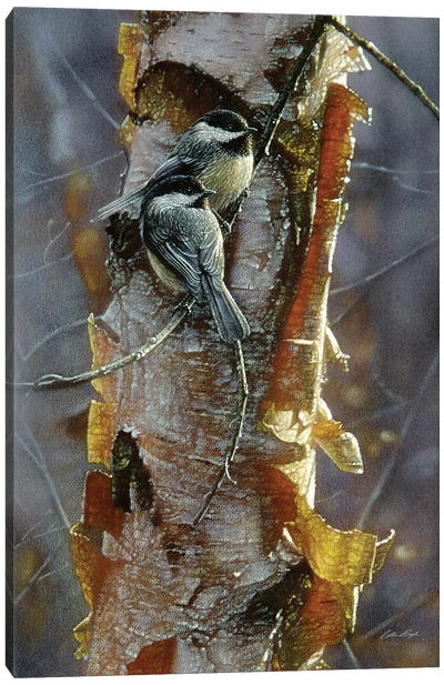 Black-Capped Chickadees - Sunlit Birch I Canvas Art Print