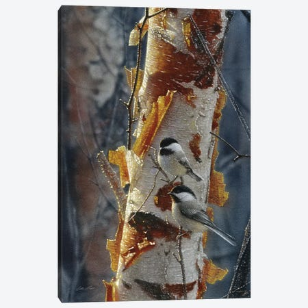 Black-Capped Chickadees - Sunlit Birch II Canvas Print #CBO96} by Collin Bogle Canvas Art Print