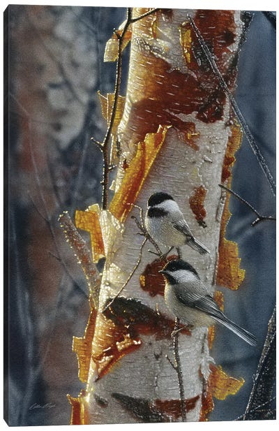 Black-Capped Chickadees - Sunlit Birch II Canvas Art Print