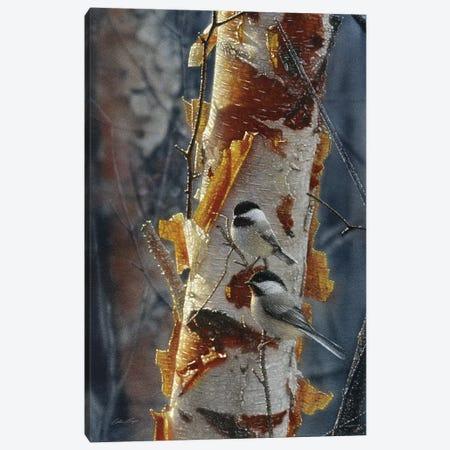 Black-Capped Chickadees - Sunlit Birch II Canvas Print #CBO96} by Collin Bogle Canvas Art Print