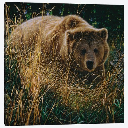 Brown Bear Crossing Paths Canvas Print #CBO98} by Collin Bogle Canvas Artwork