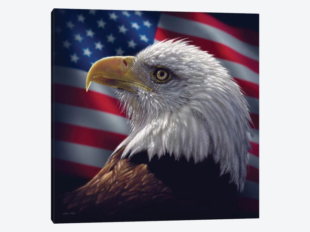 Bald Eagle Portrait America, Square by Collin Bogle 1-piece Canvas Wall Art