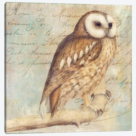 White-Faced Owl 3-Piece Canvas #CBY1063} by Color Bakery Canvas Art Print