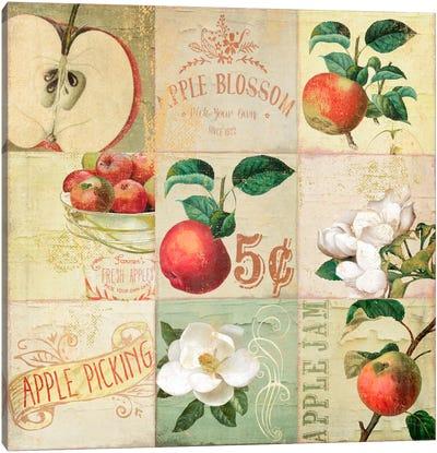 Apple Blossoms IV Canvas Art Print