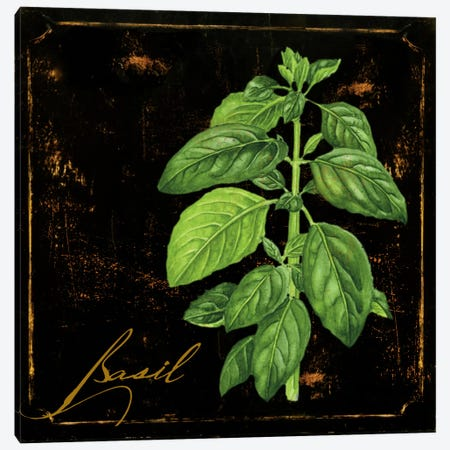 Black Gold Herbs IV Canvas Print #CBY165} by Color Bakery Canvas Art