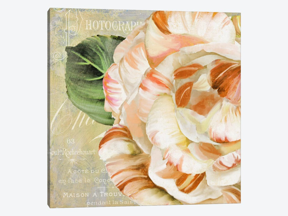 Camellias I by Color Bakery 1-piece Canvas Wall Art