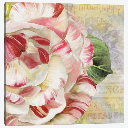 Camellias II Canvas Print #CBY222} by Color Bakery Canvas Art