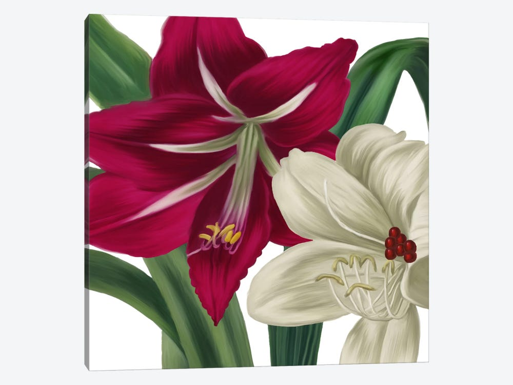 Christmas Amaryllis I by Color Bakery 1-piece Canvas Artwork