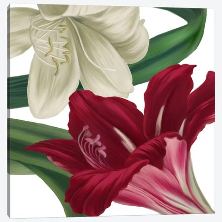 Christmas Amaryllis II Canvas Print #CBY244} by Color Bakery Canvas Print