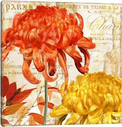Chrysanthemes I Canvas Art Print