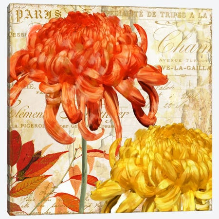 Chrysanthemes I Canvas Print #CBY245} by Color Bakery Canvas Print