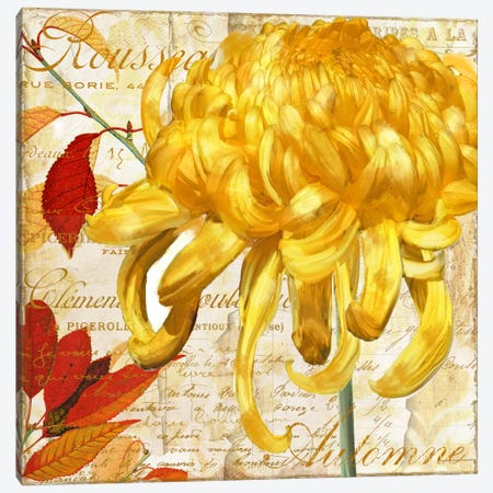 Chrysanthemes II Canvas Print #CBY246} by Color Bakery Art Print