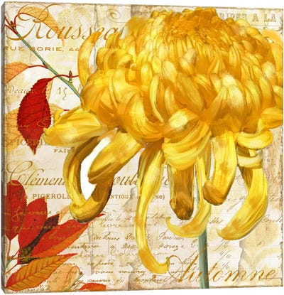 Chrysanthemes II Canvas Art Print