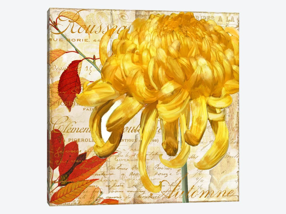 Chrysanthemes II by Color Bakery 1-piece Canvas Print