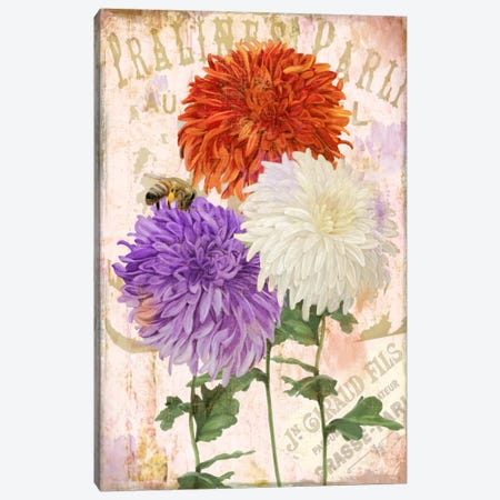 Chrysanthemums Canvas Print #CBY247} by Color Bakery Art Print
