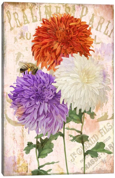 Chrysanthemums Canvas Art Print