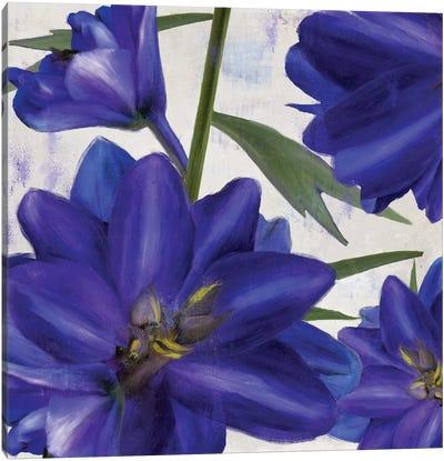 Delphine II Canvas Art Print